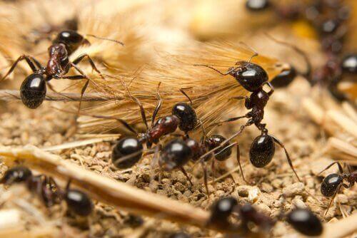 개미의 신기한 생태에 관하여