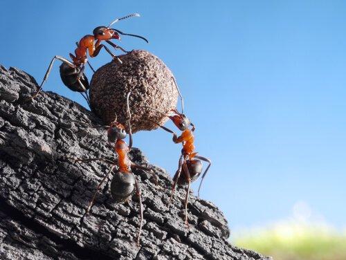 개미의 신기하고 재미있는 생태