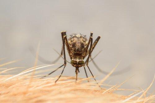 지카바이러스 전염병