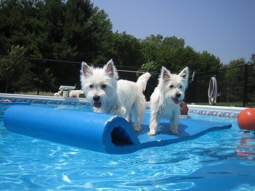반려견과 함께 즐길 수 있는 수영장 놀이
