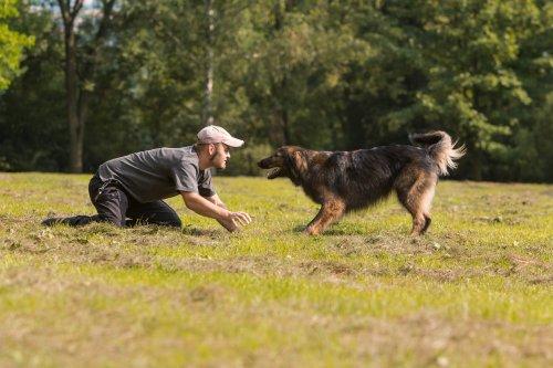 종종 가장 훈련하기 어려운 지능적인 개들