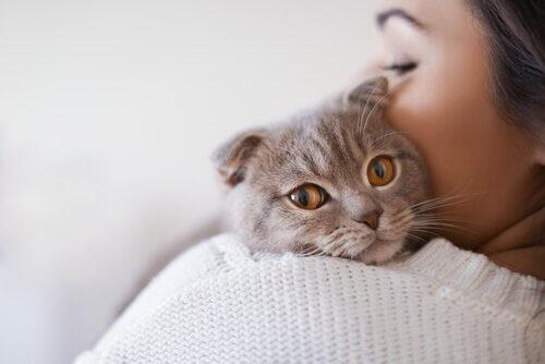 고양이 백혈병의 원인, 증상 및 치료 방법