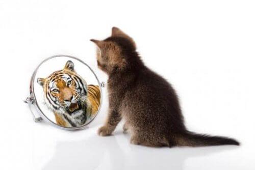 고양이와 호랑이가 공유하는 유사성