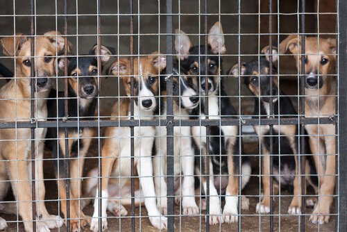 동물 보호소의 실태: 동물 유기는 그만!