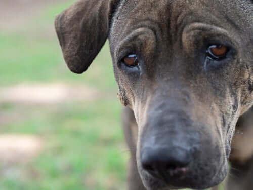 동물의 감정: 개도 인간처럼 울 수 있을까?