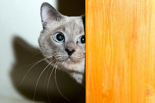 고양이의 신뢰를 얻을 수 있는 좋은 방법