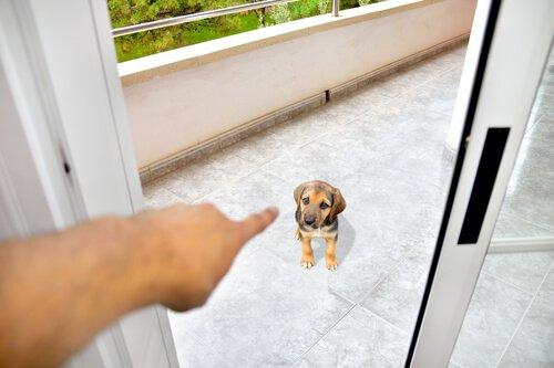 개에게 존경을 받을 수 있는 좋은 방법