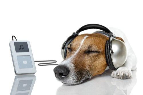 반려견을 위한 음악 채널, 릴렉스 마이 도그