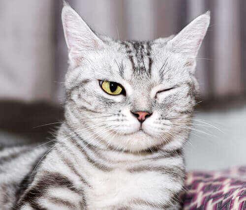 고양이 눈에2