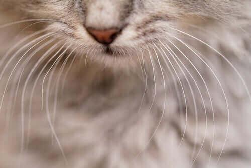 고양이 앞발에 수염이 있는 이유
