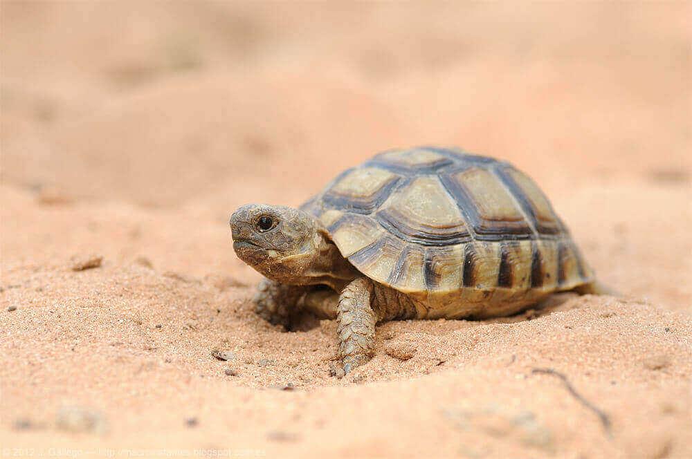 스페인에 서식하는 거북의 매력적인 세계