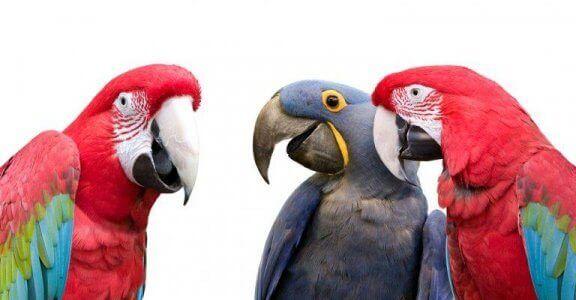 앵무새는 자신이 무슨 말을 하는지 알고 있을까?