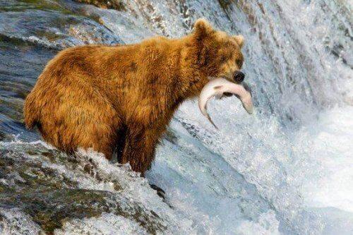 큰곰과 회색곰은 어떤 점이 다를까?