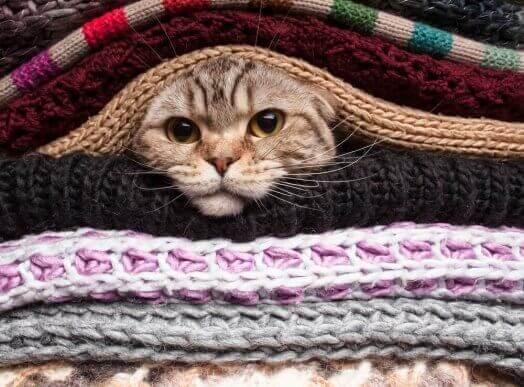 고양이가 추위를2