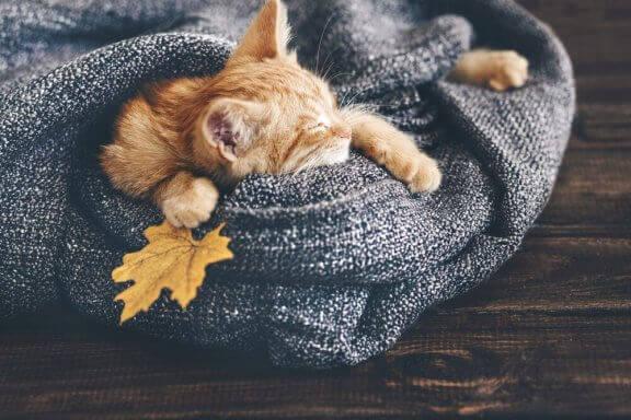 고양이가 추위를3