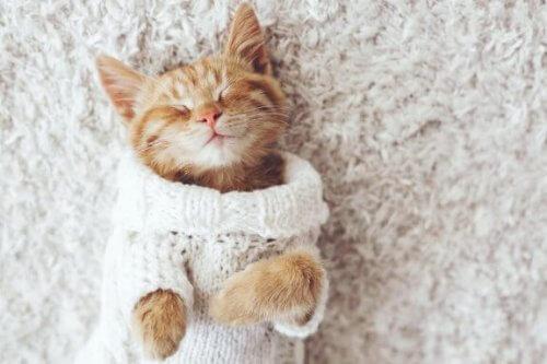 고양이가 추위를 싫어하는 이유