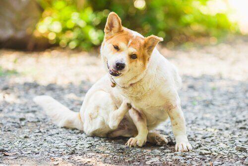 개와 고양이의 기생충을 예방하는 방법