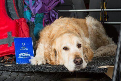 개와 함께 여행하기 위한 법적 규정