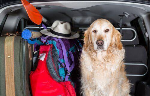 개를 위한 카시트 커버