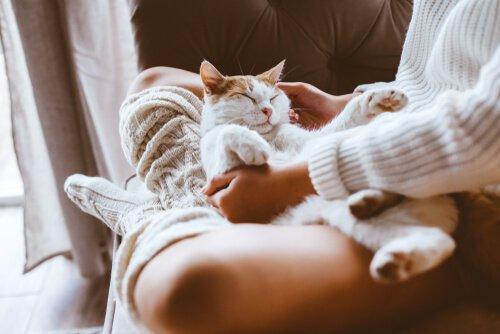 고양이는 인간의 에너지를 인지한다