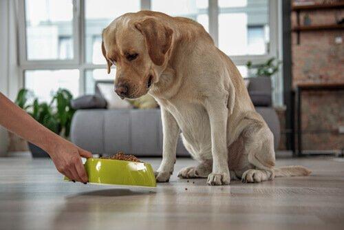 반려동물의 고콜레스테롤: 증상 및 치료