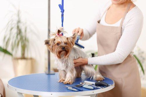 집에서 개털을 예방하고 제거하는 위생습관