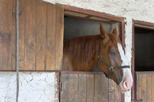 말은 서서 잠을 자는가, 아니면 누워서 잠을 자는가?