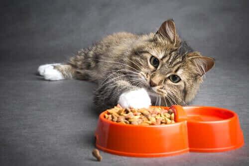 암에 걸린 고양이를 위한 식단