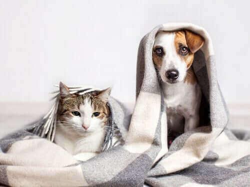 개와 비슷하게 행동하는 반려묘 품종