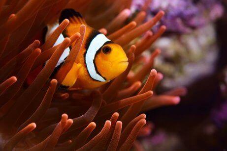 광대 물고기는2