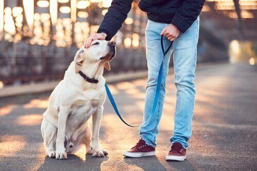 개 산책 전문가의 자격