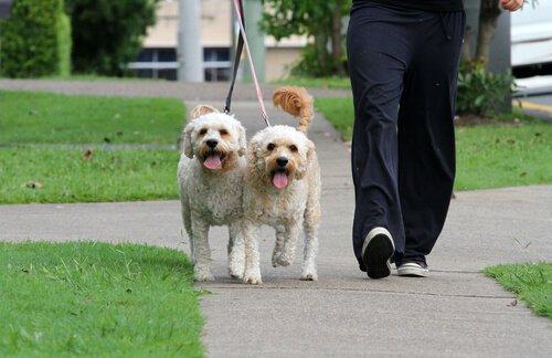 개를 산책시키는2
