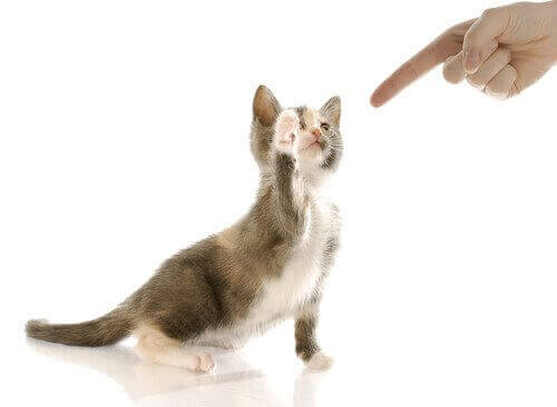 고양이가 소리를 보상과 연결