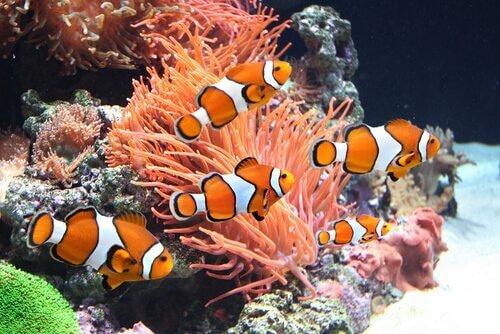 광대 물고기는3