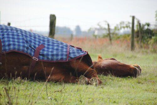 말은 서서 잘까, 누워서 잘까?
