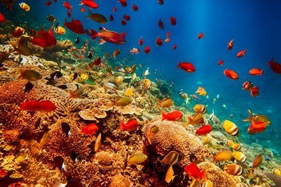 가장 이상한 해양 동물 8종