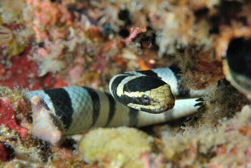 바다뱀의 생태