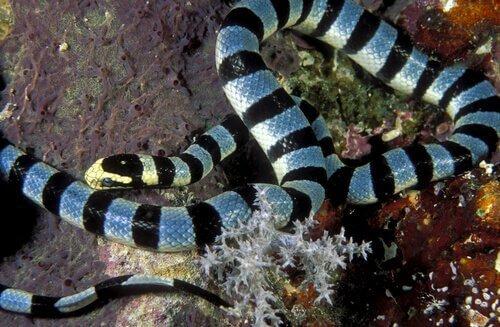 바다뱀의 독과 역설