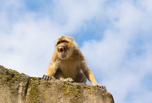 왕을 공격한 원숭이