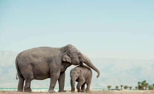 코끼리는 왜 사회적 동물일까