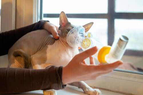 고양이의 호흡 곤란 증상 및 원인