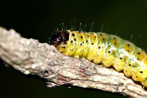 가장 일반적인 애벌레 7종