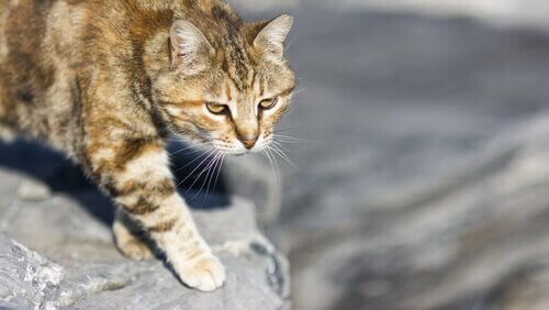 고양이의 사냥 스트레스 호르몬