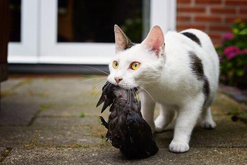 고양이의 사냥 기술과 야생성