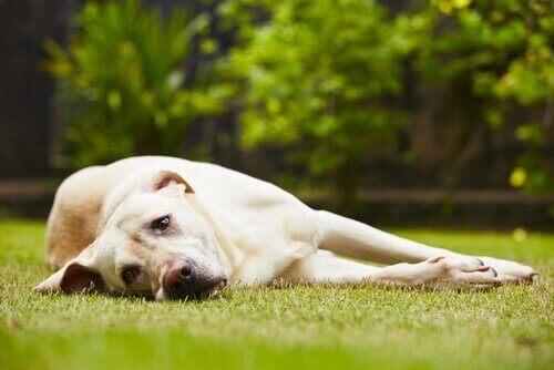 개에게 스트레스를 줄 수 있는 것은 무엇인가?