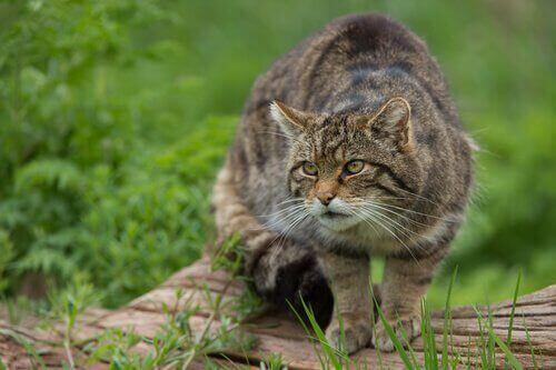 도냐나 국립공원의 다른 전형적인 동물들
