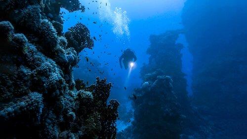 바다 곤충은 존재할까?