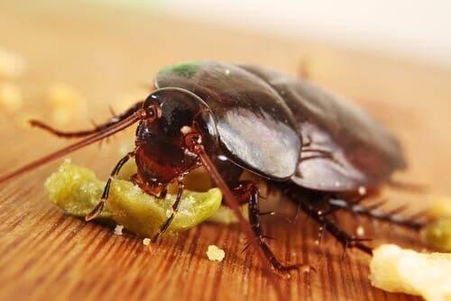 바퀴벌레가 4