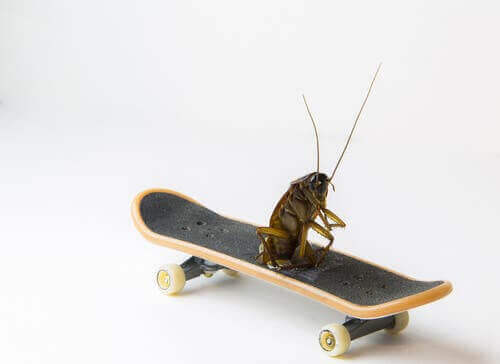 바퀴벌레가 가장 오래된 곤충인 이유