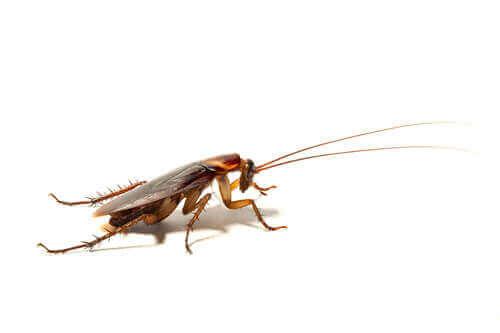 바퀴벌레가5
